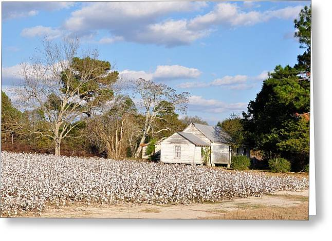 Georgia Cotton Fields Greeting Cards - The Cotton Pickers House Greeting Card by Jan Amiss Photography