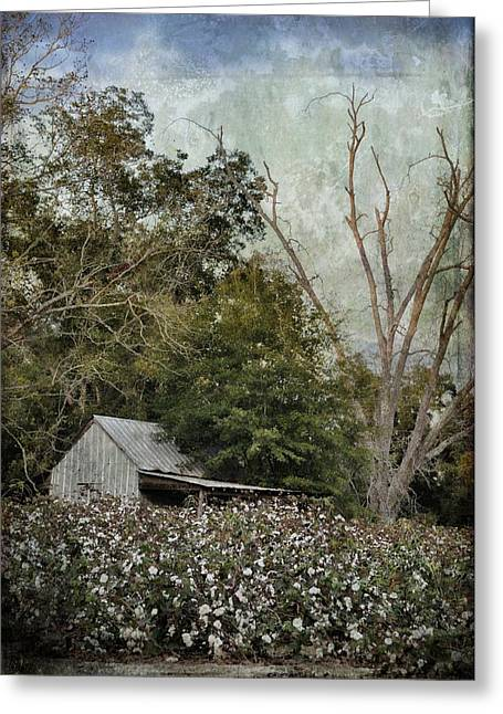 Georgia Cotton Fields Greeting Cards - The Cotton Shed Greeting Card by Jan Amiss Photography