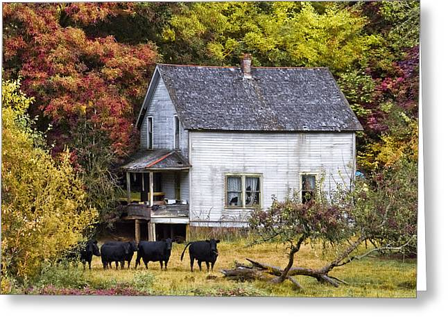 The Cows Came Home Greeting Card by Debra and Dave Vanderlaan
