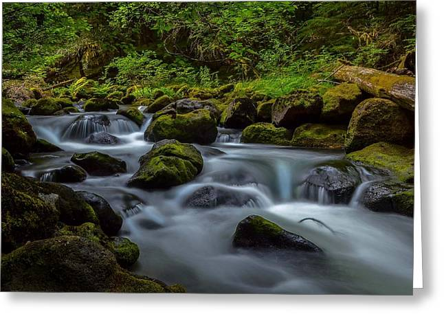 Moss Greeting Cards - The Creek Greeting Card by Debra Waddell