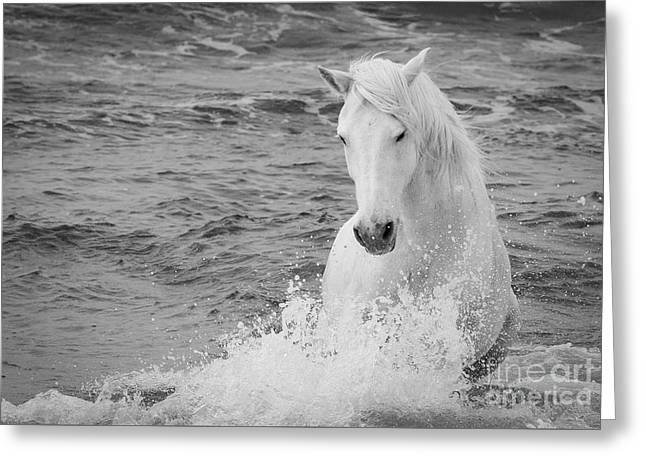 The Curve Of The White Horse Greeting Card by Carol Walker