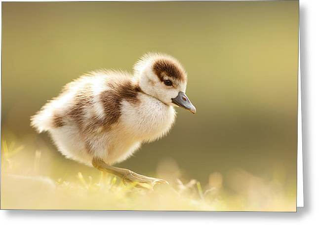 Cute Bird Greeting Cards - The Cute Factor - Egyptean Gosling Greeting Card by Roeselien Raimond