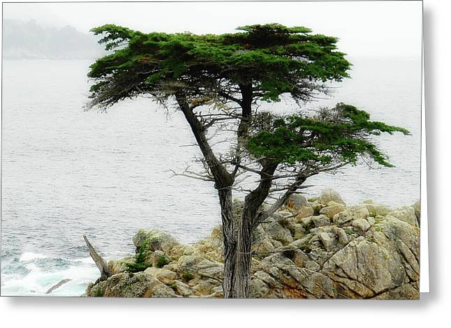 The Cypress Greeting Card by Donna Blackhall