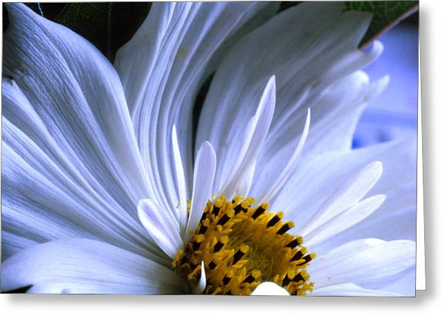 Close Focus Nature Scene Greeting Cards - The Daisyverse Greeting Card by Thomas Shanahan