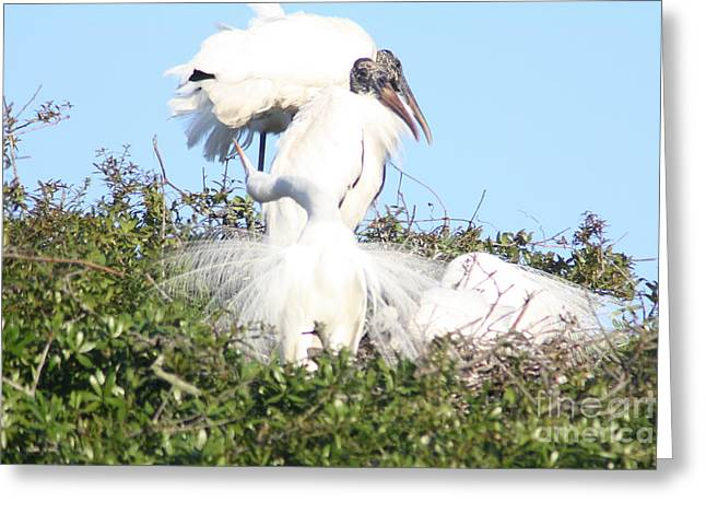 Tern Greeting Cards - The Dance Greeting Card by Chuck  Hicks