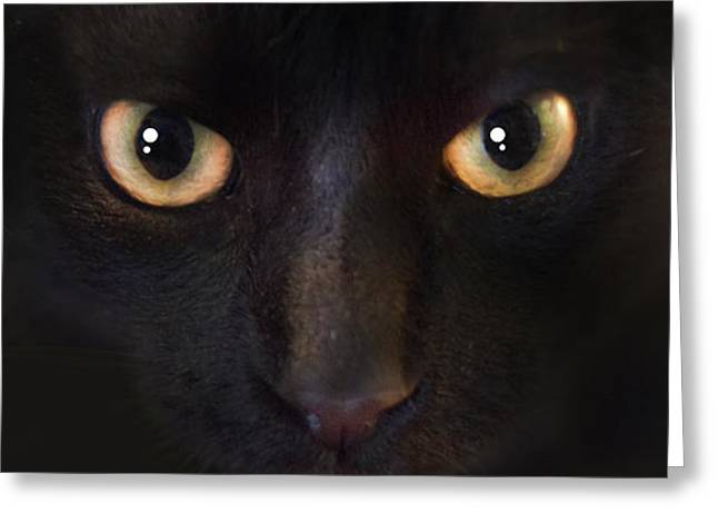 The Dark Cat Greeting Card by Gina Dsgn