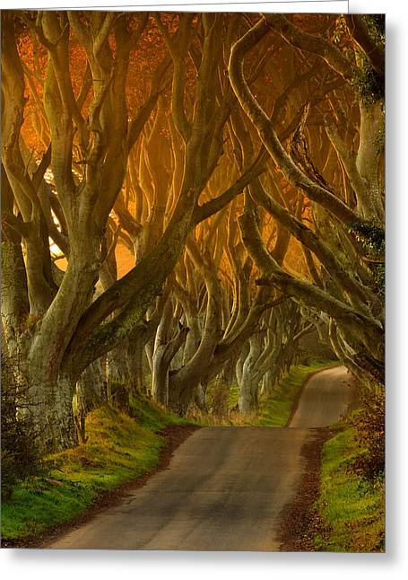 The Dark Hedges II Greeting Card by Pawel Klarecki