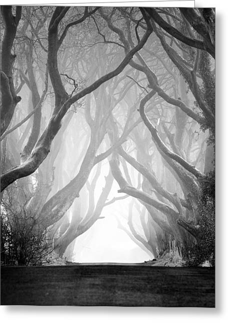 The Dark Hedges Iv Greeting Card by Pawel Klarecki