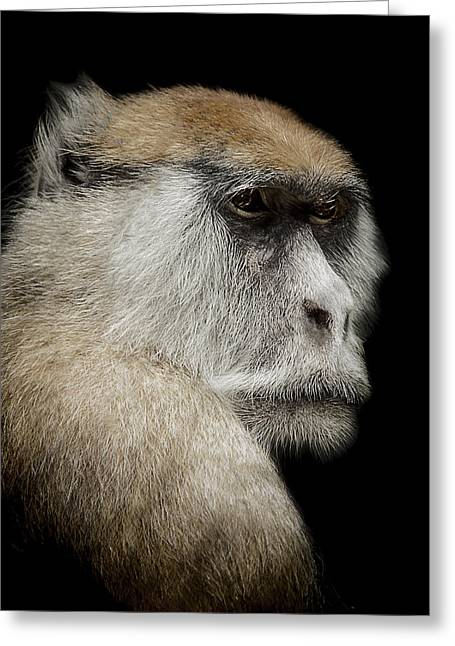 Primate Greeting Cards - The day dreamer Greeting Card by Paul Neville