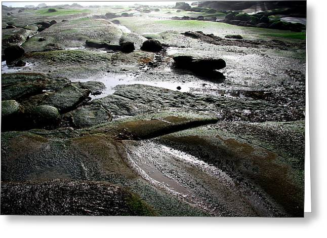 Moist Greeting Cards - The Distance At Low Tide Greeting Card by Kreddible Trout