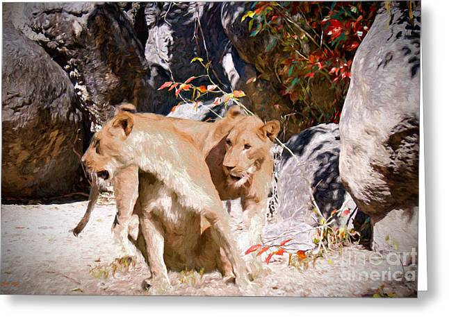 Lioness Greeting Cards - The Distraction Greeting Card by Judy Kay