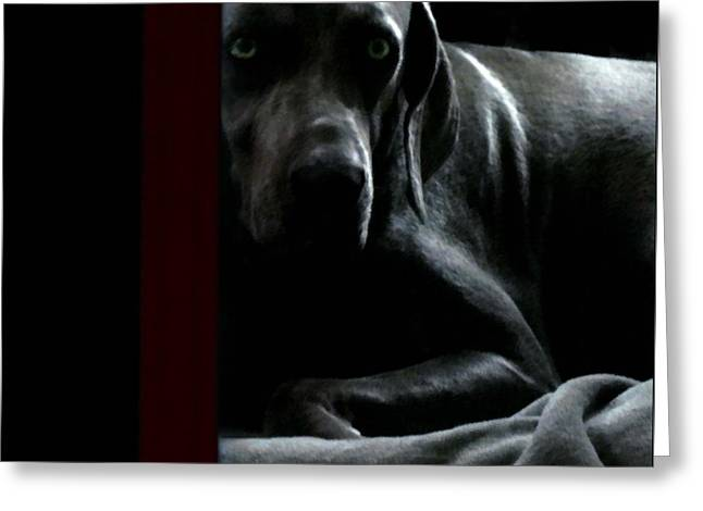 The Dog In The Mirror Photograph Greeting Card by Miss Pet Sitter