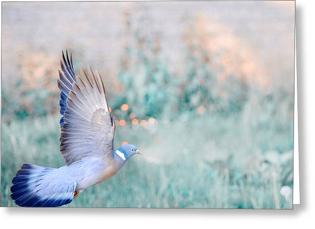 Animals Love Greeting Cards - The Dove of Hope Greeting Card by Jenny Rainbow