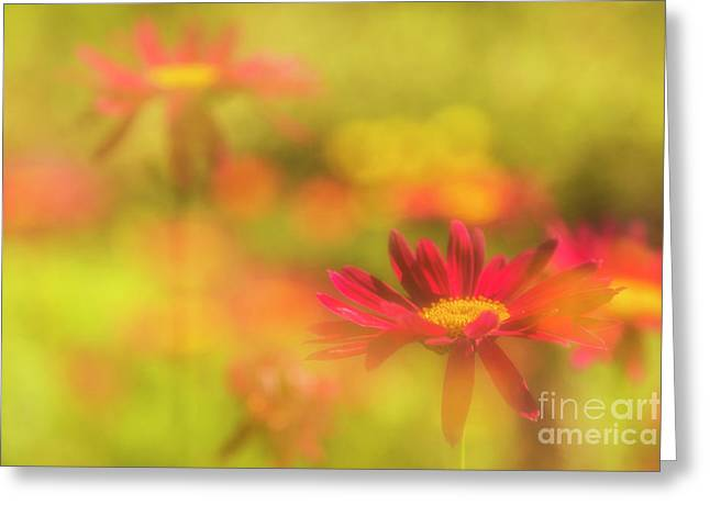 The Dream Garden Greeting Card by Veikko Suikkanen
