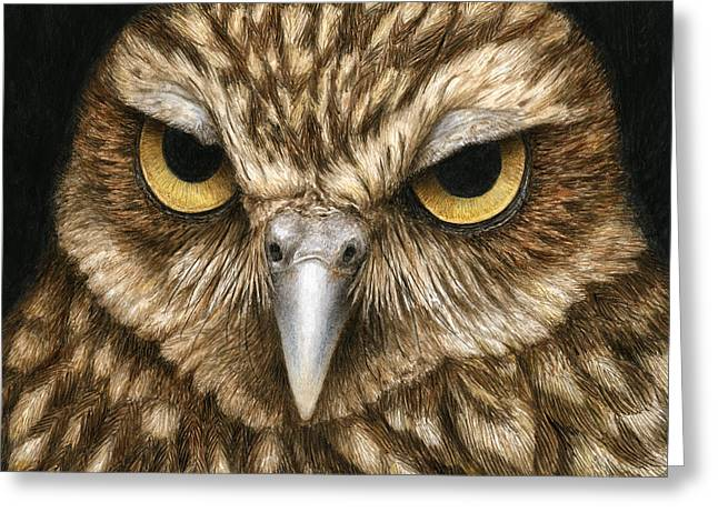 Wildlife Watercolor Greeting Cards - The Dubious Owl Greeting Card by Pat Erickson