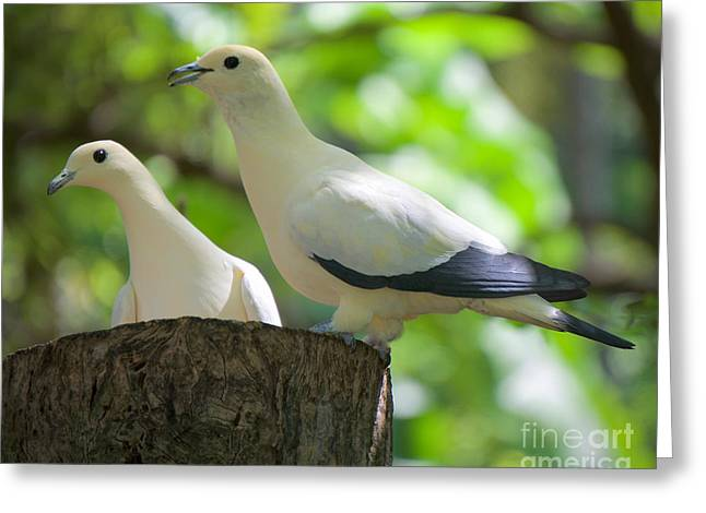 The Duet Greeting Card by Judy Kay