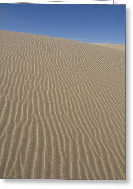 Tara Lynn Greeting Cards - The Dune Greeting Card by Tara Lynn