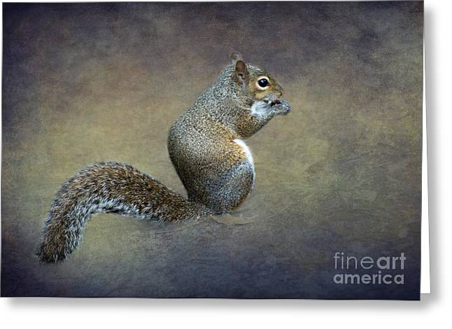 Sciurus Carolinensis Greeting Cards - The Eastern Gray Squirrel by Darrell Hutto Greeting Card by Darrell Hutto