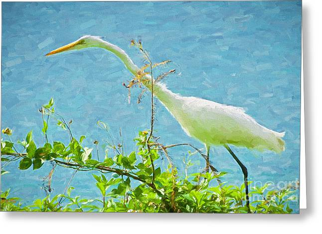 The Egret Greeting Card by Judy Kay