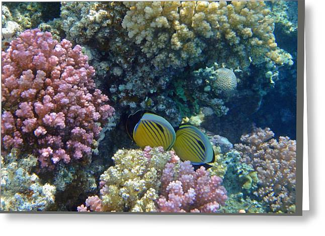 Decorative Fish Greeting Cards - The elegant Exquisite Butterflyfish couple 2 Greeting Card by Johanna Hurmerinta