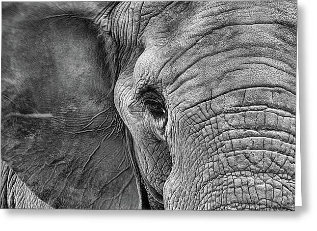 The Elephant In Black And White Greeting Card by JC Findley