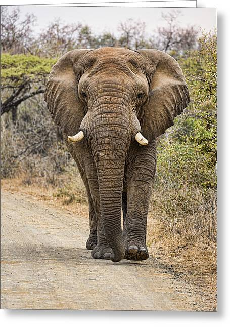 Game Greeting Cards - The Elephant Moves So Slowly Greeting Card by Stephen Stookey