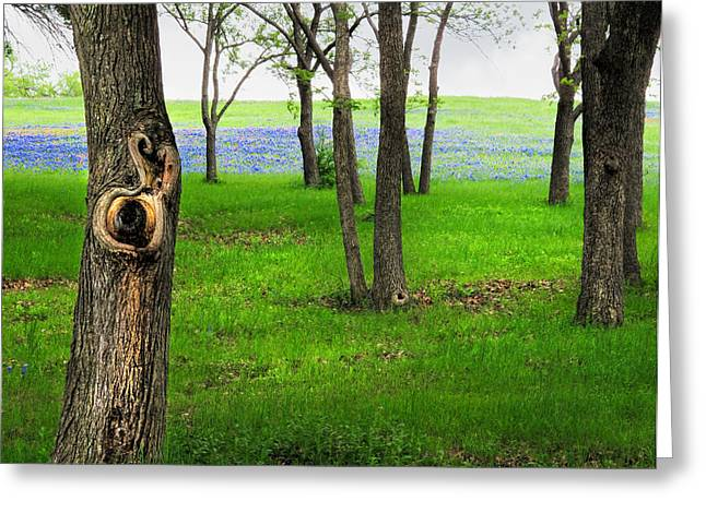 Bluebonnet Landscape Greeting Cards - The Enchanted Forest Greeting Card by David and Carol Kelly