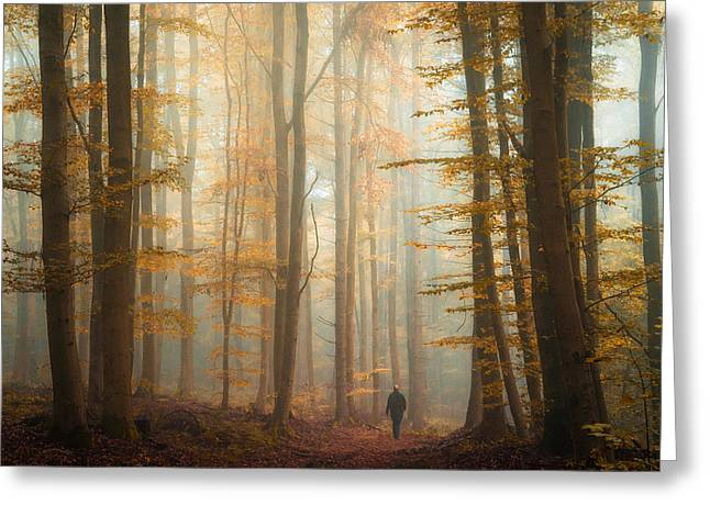 Fall Trees Greeting Cards - The Enchanted Wood Greeting Card by Heiko Gerlicher