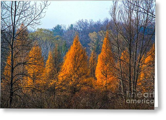 Autum Abstract Greeting Cards - The end of another season Greeting Card by Robert Pearson