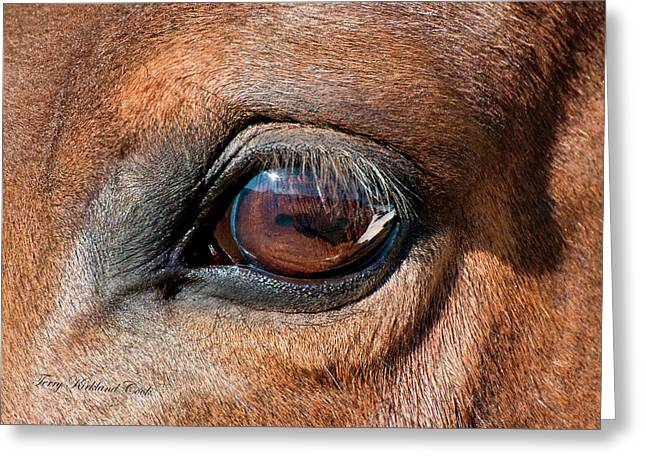 Yearling Greeting Cards - The Equine Eye Greeting Card by Terry Kirkland Cook