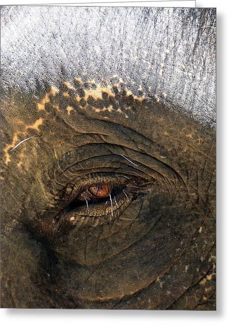 Elephants Eye Greeting Cards - The Eye of Wisdom Greeting Card by Kelly Jones
