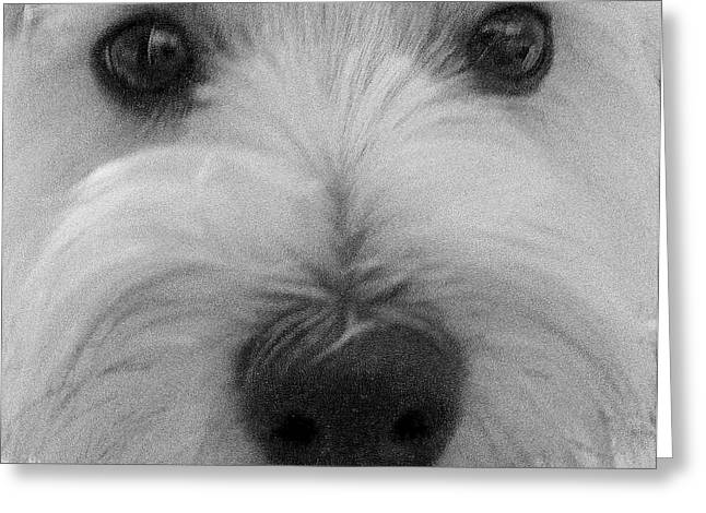 Puppies Digital Greeting Cards - The Eyes Have It Greeting Card by Ed Smith