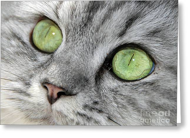 Cat Reflection Greeting Cards - The Eyes Have It Greeting Card by Graham Taylor