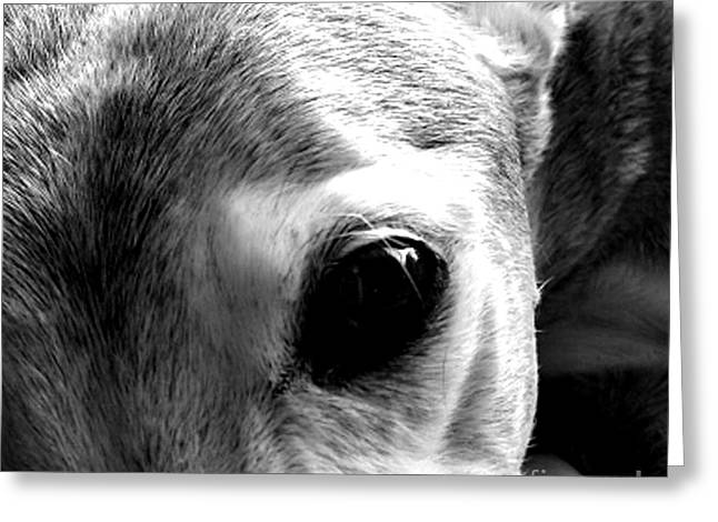 Greyhound Dog Greeting Cards - The Eyes have it Greeting Card by Jennifer Howard