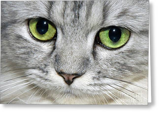 Cat Reflection Greeting Cards - The Face Greeting Card by  Graham Taylor