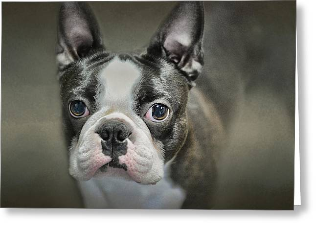Artistic Photography Greeting Cards - The Face Of The Boston Greeting Card by Jai Johnson