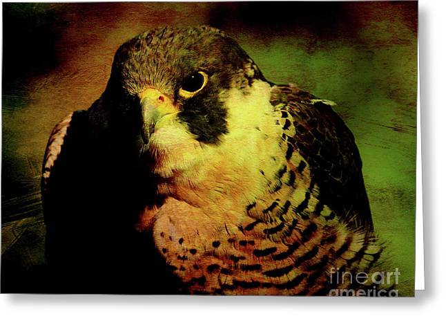 Red Tail Hawk Digital Art Greeting Cards - The Falcon Greeting Card by Wingsdomain Art and Photography