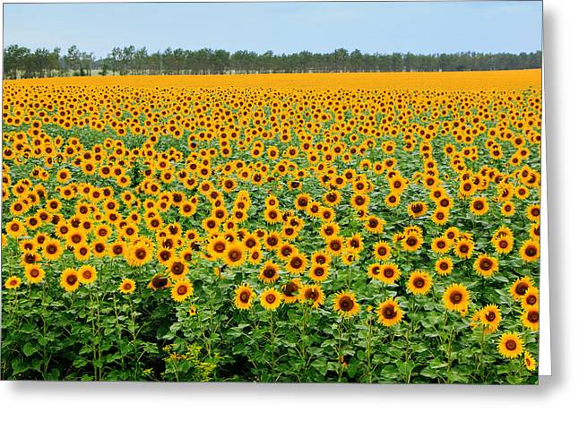 ist Photographs Greeting Cards - The Field of Suns Greeting Card by Victor Kovchin