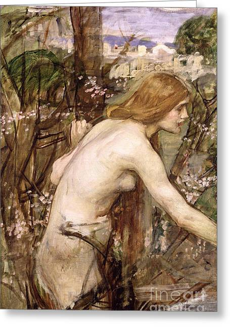 Sweetheart Greeting Cards - The Flower Picker  Greeting Card by John William Waterhouse