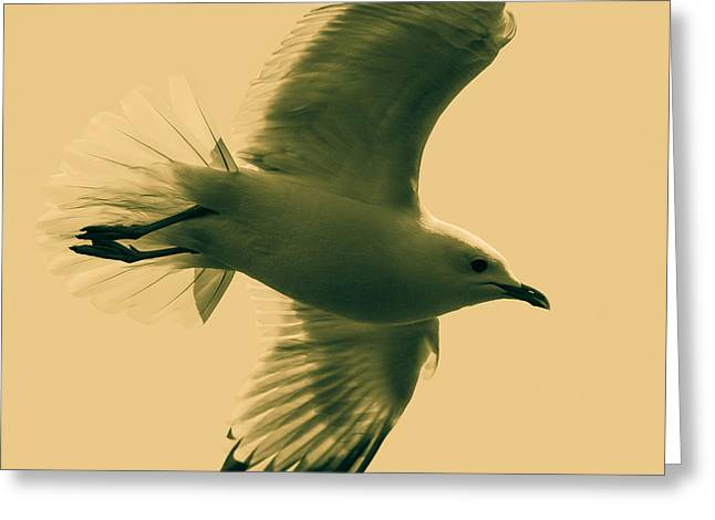 Seabirds Digital Art Greeting Cards - The flying seagull  Greeting Card by Toppart Sweden