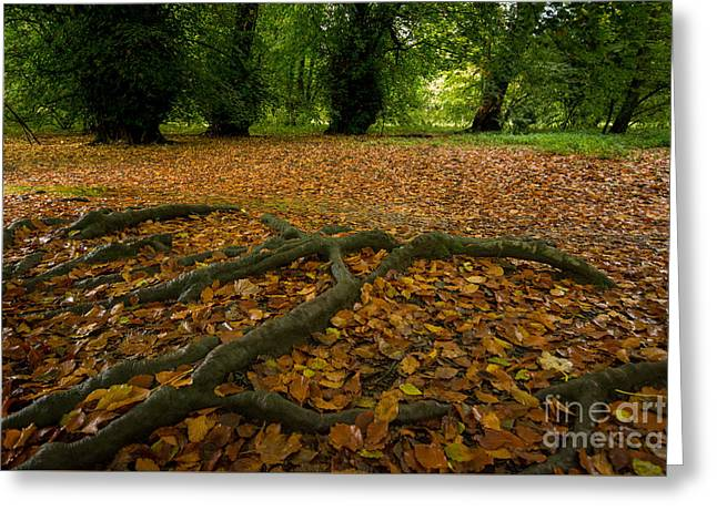The Forest Floor Greeting Card by Stephen Smith