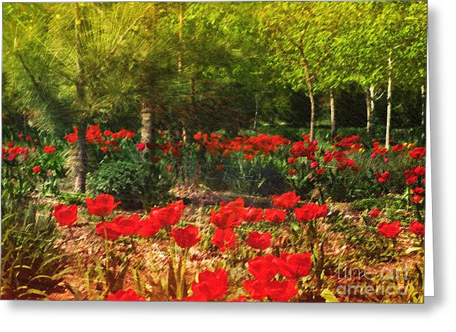 Okanagan Greeting Cards - The Forest Floor  Greeting Card by Tara Turner