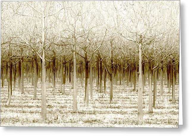 Forest Greeting Cards - The Forest for the Trees Greeting Card by Holly Kempe