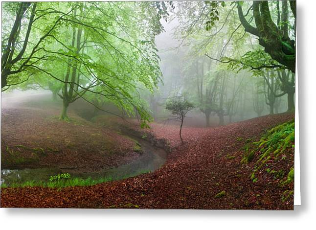 Pais Vasco Greeting Cards - The Forest Maravillador Iii Greeting Card by Juan Pixelecta