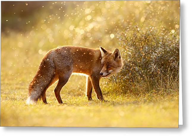Vulpes Greeting Cards - The Fox & The Fairy Dust Greeting Card by Roeselien Raimond