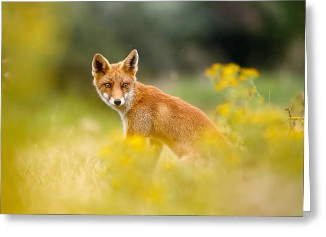 The Fox And The Flowers Greeting Card by Roeselien Raimond