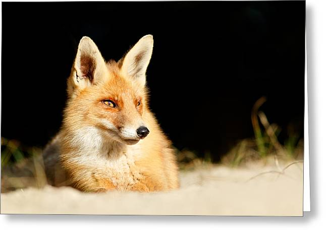 The Fox And The Light Greeting Card by Roeselien Raimond