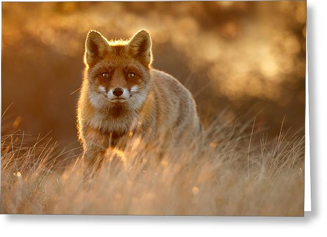 The Fox With The Golden Face Greeting Card by Roeselien Raimond