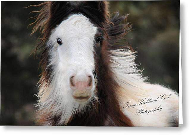 Gypsy Greeting Cards - The Fuzziest Gypsy Foal Greeting Card by Terry Kirkland Cook