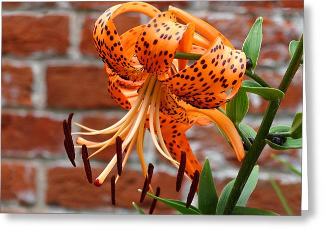 The Garden Tiger Lily Greeting Card by Mike McGlothlen